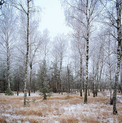 Photograph - Winter Forest. Shchymel, 2014. by Andriy Maykovskyi