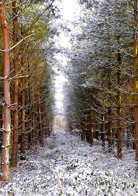 Frost Mixed Media - Winter Forest by Svetlana Sewell