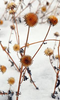Photograph - Winter Forlorn by Chalet Roome-Rigdon