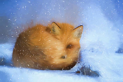 Photograph - Winter Fox In A Snowstorm by Ericamaxine Price
