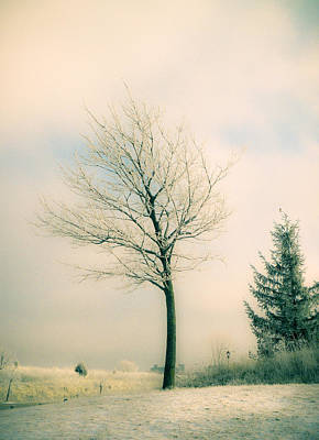 Photograph - Winter Freeze by Julie Palencia