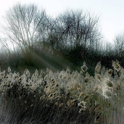 Photograph - Winter Fringe by Kendall McKernon