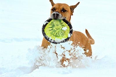 Photograph - Winter Frisbee Fun by Adam Jewell