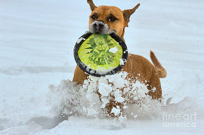 Photograph - Winter Frisbee Games by Adam Jewell