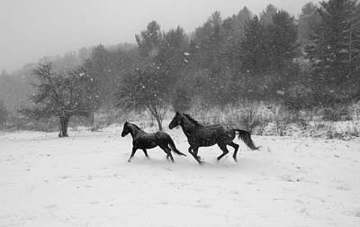 Loping Photograph - Winter Frolic by Frederica Georgia