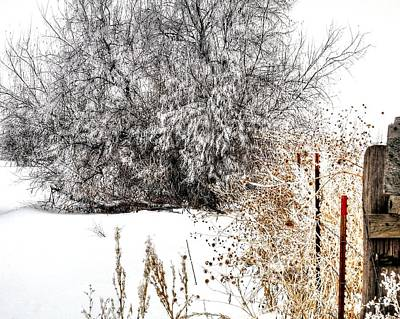 Jerry Sodorff Royalty-Free and Rights-Managed Images - Winter Frost 13218 by Jerry Sodorff