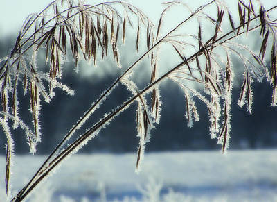 Photograph - Winter Frost 4 by Scott Hovind