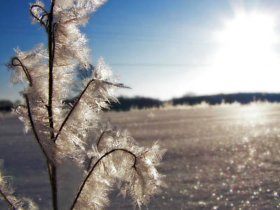 Photograph - Winter Frost 5 by Scott Hovind