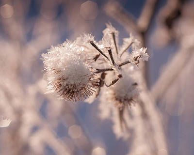 Photograph - Winter Frost by Miguel Winterpacht