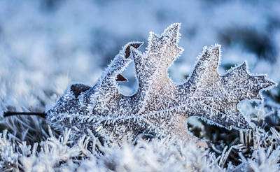 Photograph - Winter Frost by Parker Cunningham