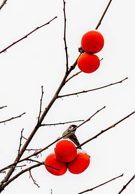 Persimon Photograph - Winter Fruit by Peteris Vaivars