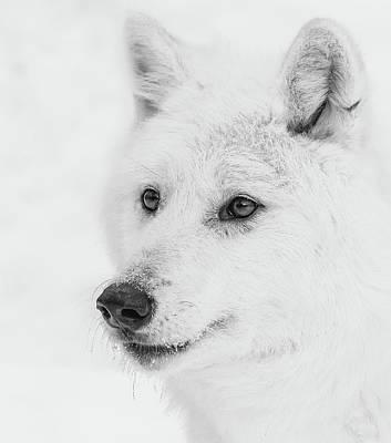 Photograph - Winter Fur Coat by Athena Mckinzie