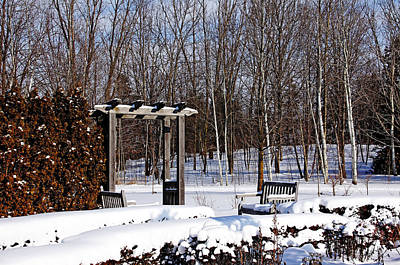 Photograph - Winter Garden by Debbie Oppermann