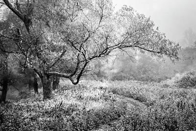 Photograph - Winter Garden by Debra and Dave Vanderlaan