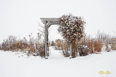 Photograph - Winter Garden by Rikk Flohr
