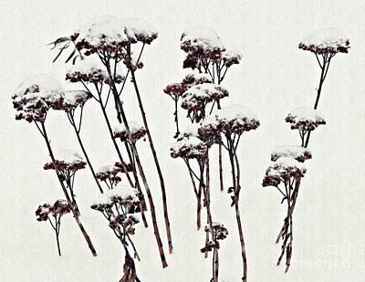 Photograph - Winter Garden by Sarah Loft