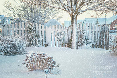 Photograph - Winter Garden by Verena Matthew