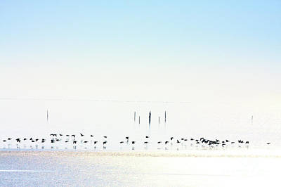 Photograph - Winter Geese Frozen Ice by Jan Brons