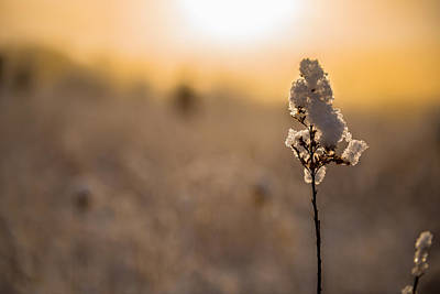 Photograph - Winter Glow #1 by Mark Robert Rogers