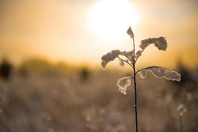 Photograph - Winter Glow #2 by Mark Robert Rogers