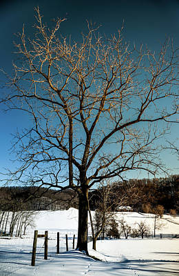 Walnut Tree Photograph - Winter Glow by Karen Wiles