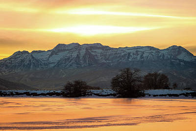 Photograph - Winter Gold by Johnny Adolphson