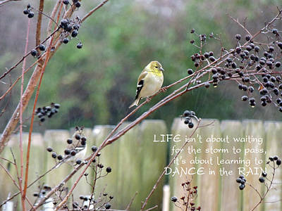 Photograph - Winter Goldfinch In The Rain With Quotation by Jayne Wilson