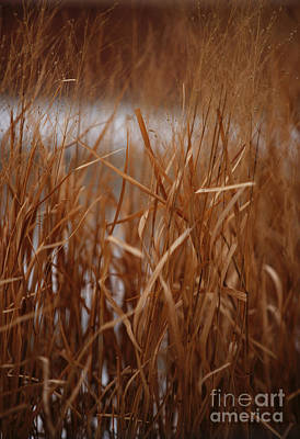 Photograph - Winter Grass - 1 by Linda Shafer