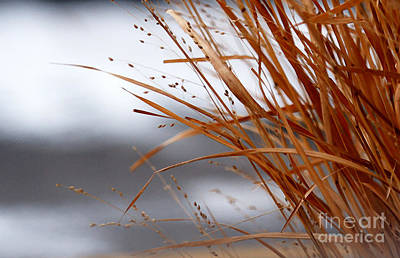 Photograph - Winter Grass - 2 by Linda Shafer