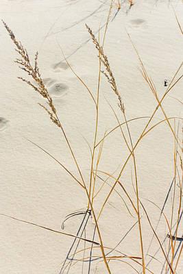 Photograph - Winter Grass At The Dunes by Joni Eskridge