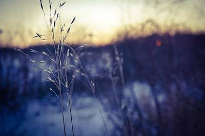 Photograph - Winter Grass by Desmond Raymond
