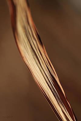 Photograph - Winter Grass I by Nancy  Coelho