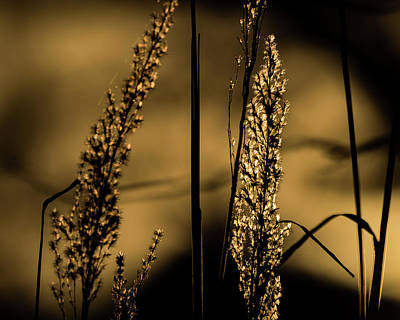 Photograph - Winter Grass by Jay Stockhaus