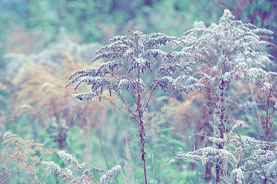 Photograph - Winter Grass by Jenny Rainbow