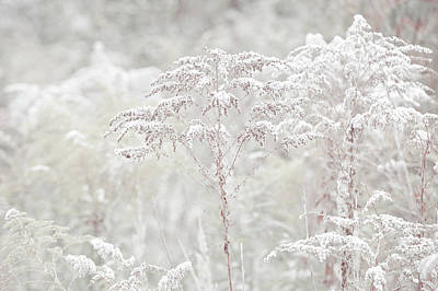 Photograph - Winter Grass Light by Jenny Rainbow
