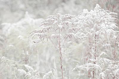 Photograph - Winter Grass Light by Jenny Rainbow