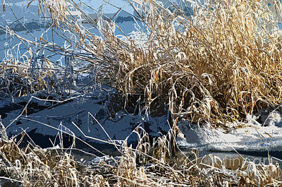 Photograph - Winter Grass by Sharon Talson