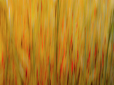 Photograph - Winter Grasses #1 by Tom Vaughan