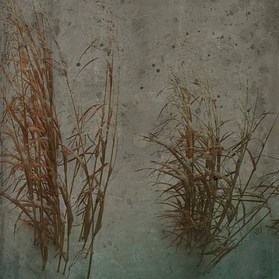 Photograph - Winter Grasses by Jim Vance
