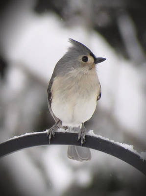 Photograph - Winter Gray - Bird by MTBobbins Photography
