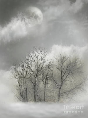 Photograph - Winter Gray by John Anderson