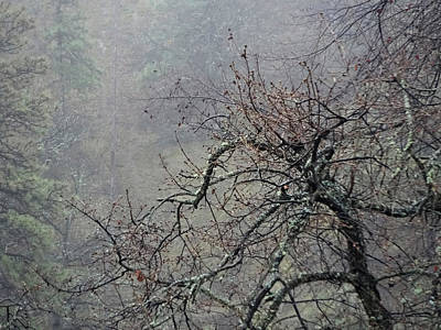 Photograph - Winter Grays by Jacqueline  DiAnne Wasson