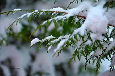 Photograph - Winter Green by Randi Grace Nilsberg