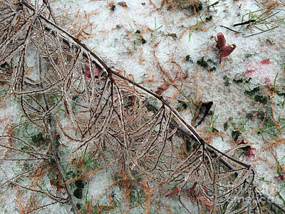 Haverford Photograph - Winter Ground  by Clay Cofer