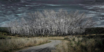 Photograph - Winter Grove by William Ferry