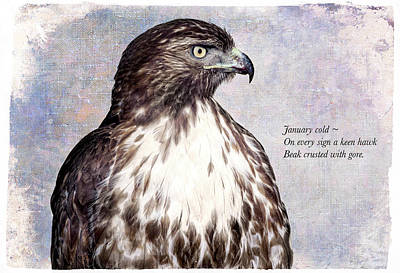 Haiku Wall Art - Digital Art - Winter Hawks by John Williams
