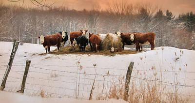 Cow Mixed Media - Winter Hay by Lori Deiter