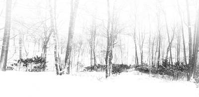 Photograph - Snowy Forest - North Carolina by Victor Ellison