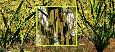 Namaste With Pixels Royalty Free Images - Winter Hazelnut Orchard 2 Royalty-Free Image by Jerry Sodorff