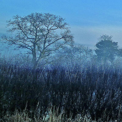 Photograph - Winter Hedgerow by Anne Kotan